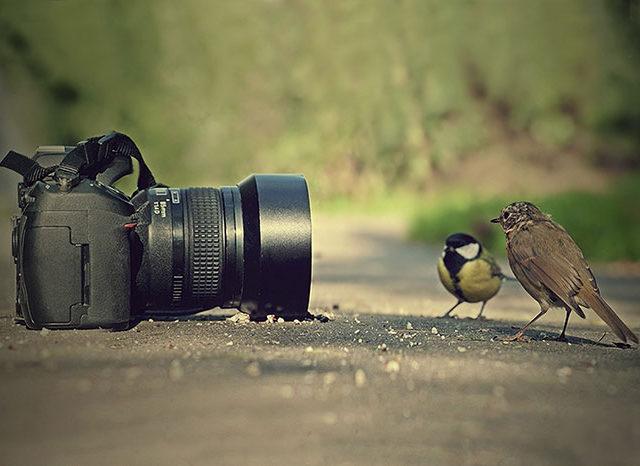 vous faites de la photo
